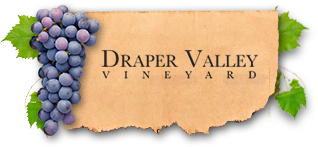 Draper Valley Vineyard
